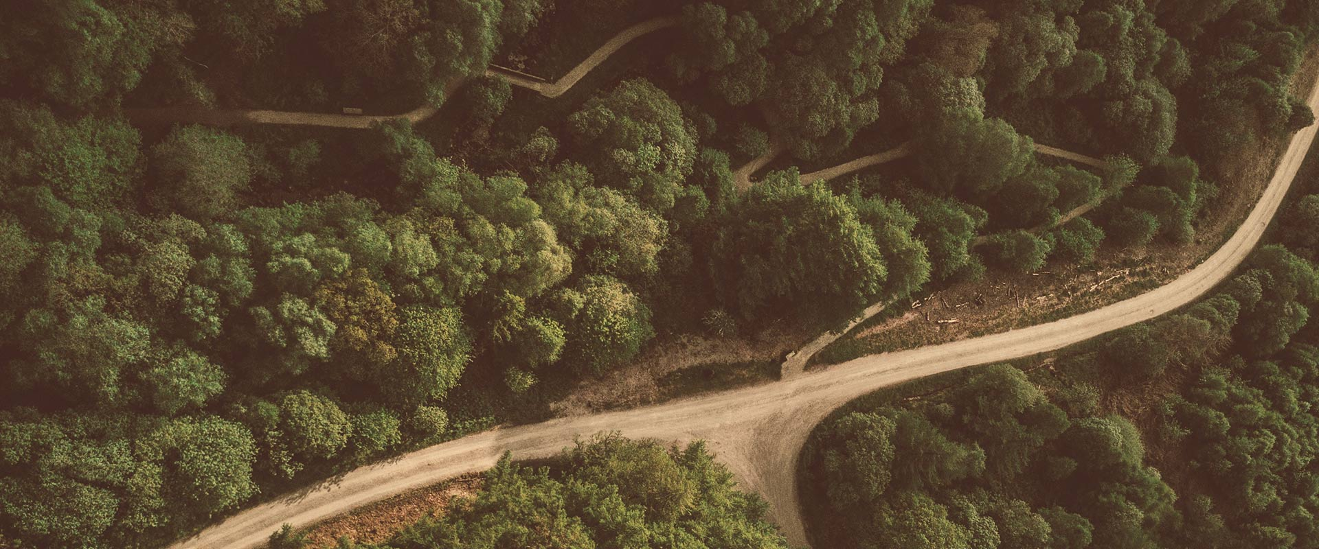 Forest with a road from above