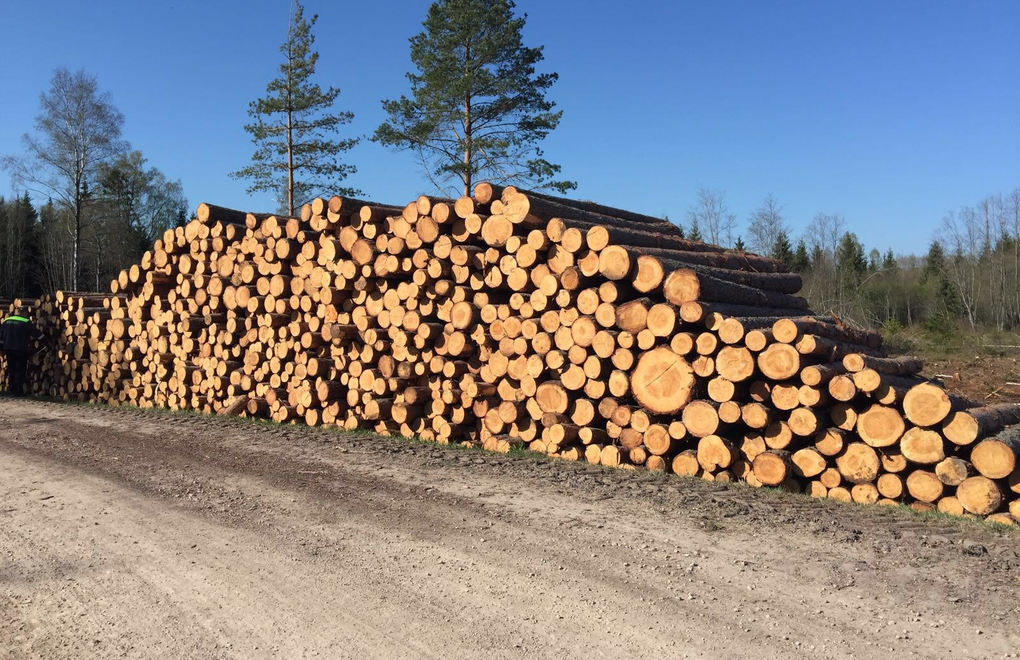 Pile of round timber